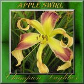 Photo Courtesy of Champion Daylilies. Used with Permiss