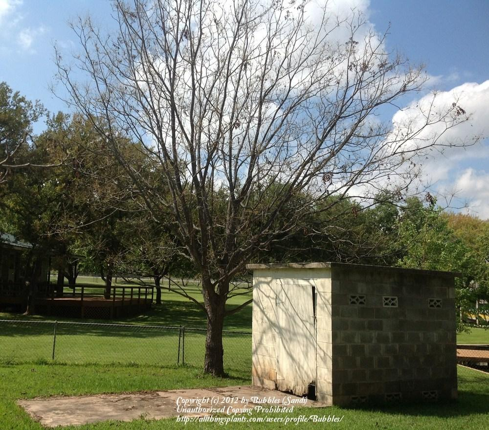 Texas Gardening Forum Army Worms In Pecan Tree And On
