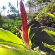 Location: Ka'anapali, Maui, HawaiiDate: 2012-10-12