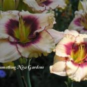 Photo Courtesy of Something New Gardens. Used with Perm