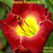 Photo Courtesy of Dololly's Daylilies. Used with Permission