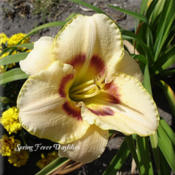 Photo Courtesy of Spring Fever Daylilies. Used with Permission