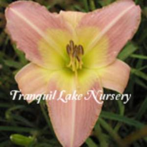 Photo Courtesy of Tranquil Lake Nursery. Used with Permission