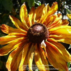 Thumb of 2012-10-30/Joannabanana/40892f