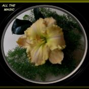Photo Courtesy of Woods daylily gardens Au. Used with P