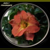 Photo Courtesy of Woods Daylily Gardens, Au. Used with