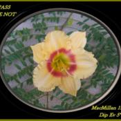 Photo Courtesy of Woods Daylily Gardens, Au. Used with Permission