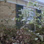 Location: Middle TennesseeDate: 2012-11-05Branching to 8 ft. before pruning