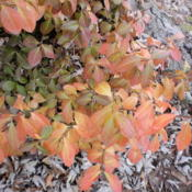 Location: Middle TennesseeDate: 2012-11-13Fall