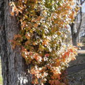 Location: Middle TennesseeDate: 2012-11-13Fall colors