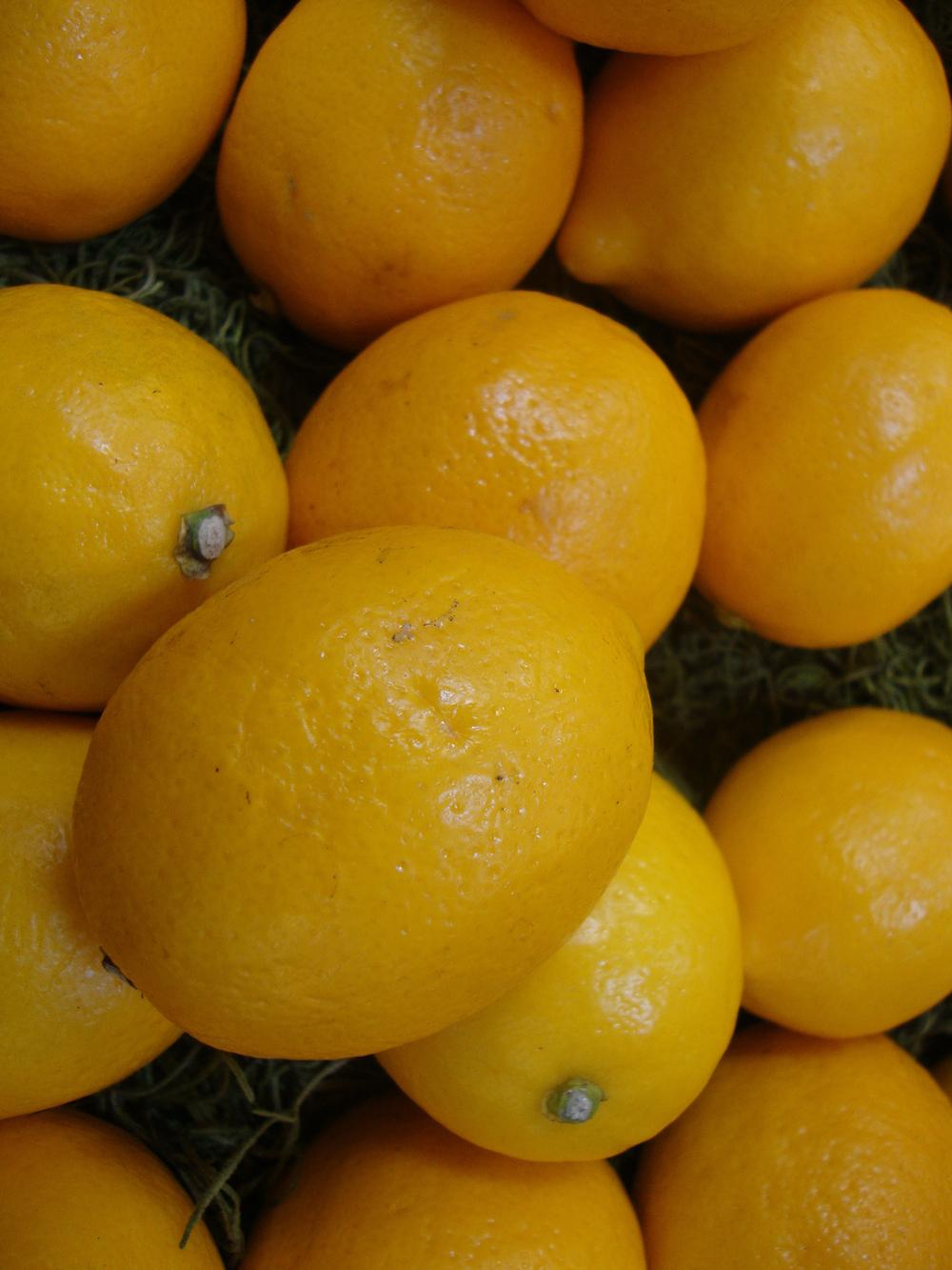 Photo of Lemon (Citrus x limon) uploaded by Paul2032