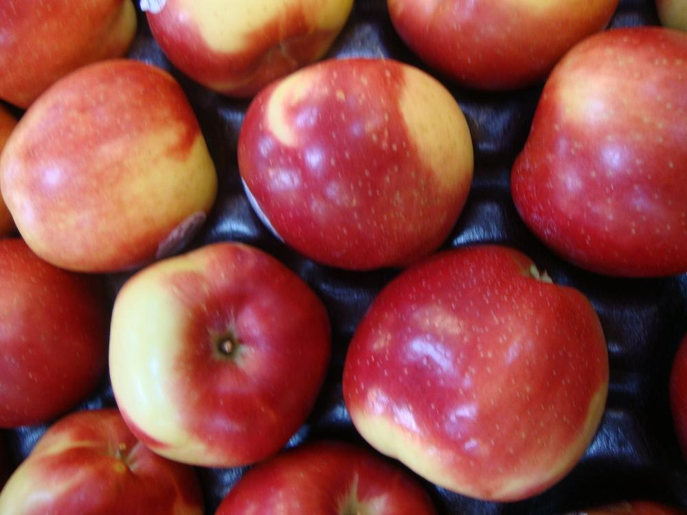 Photo of Apple (Malus pumila Pink Lady) uploaded by Paul2032