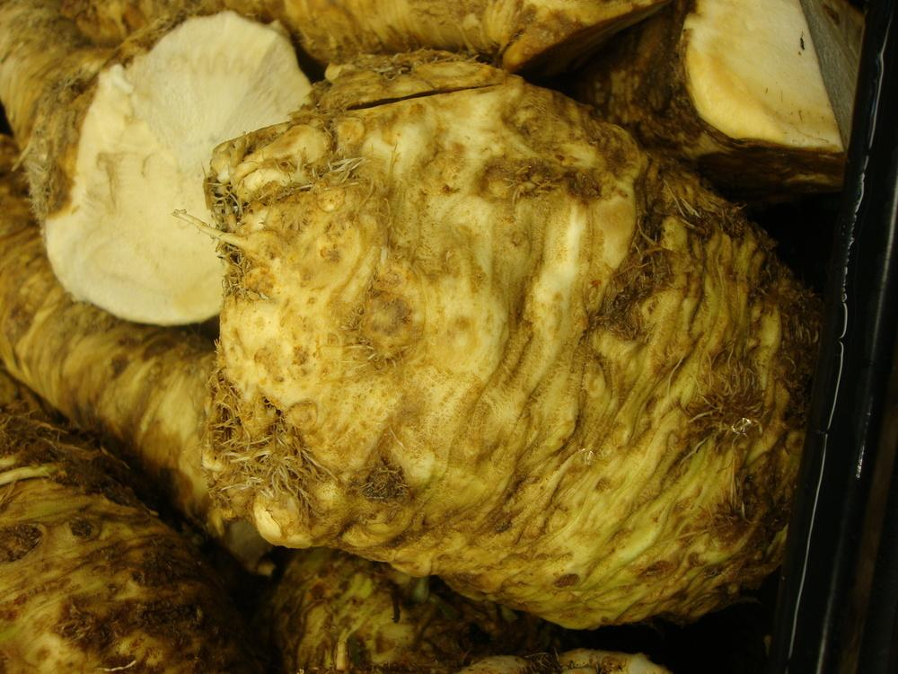 Photo of Horseradish (Armoracia rusticana) uploaded by Paul2032