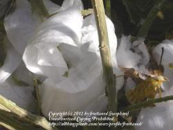 Thumb of 2012-12-12/frostweed/33a0c5