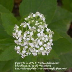 Thumb of 2012-12-12/frostweed/e7b4a1