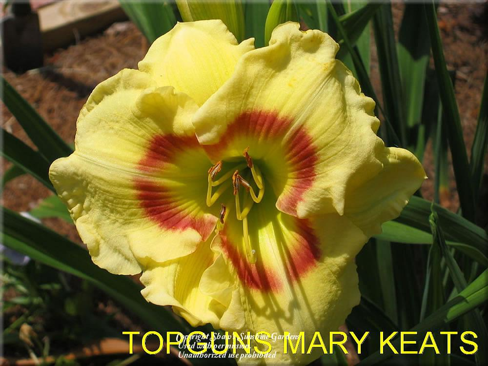 Photo of Daylily (Hemerocallis 'Topguns Mary Keast') uploaded by vic