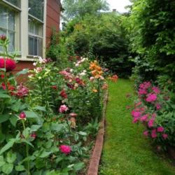 Rose Garden Ideas how to grow roses on balcony patio and terrace Thumb Of 2013 01 16newyorkrita6045f3