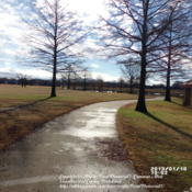 Location: Plano, TXDate: 2013-01-10Bald Cypress trees at Bob  Woodruff Park in Winter