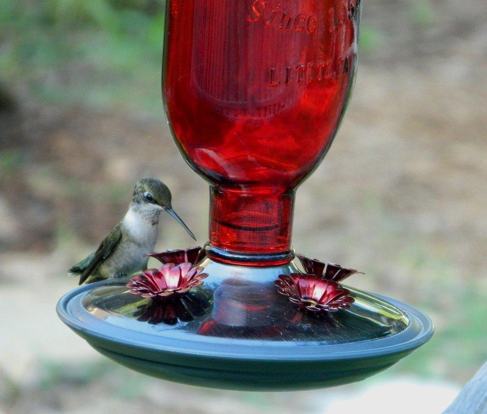 Make your own hummingbird nectar garden 2013 02 05wildflowers4ed4d4 forumfinder Image collections
