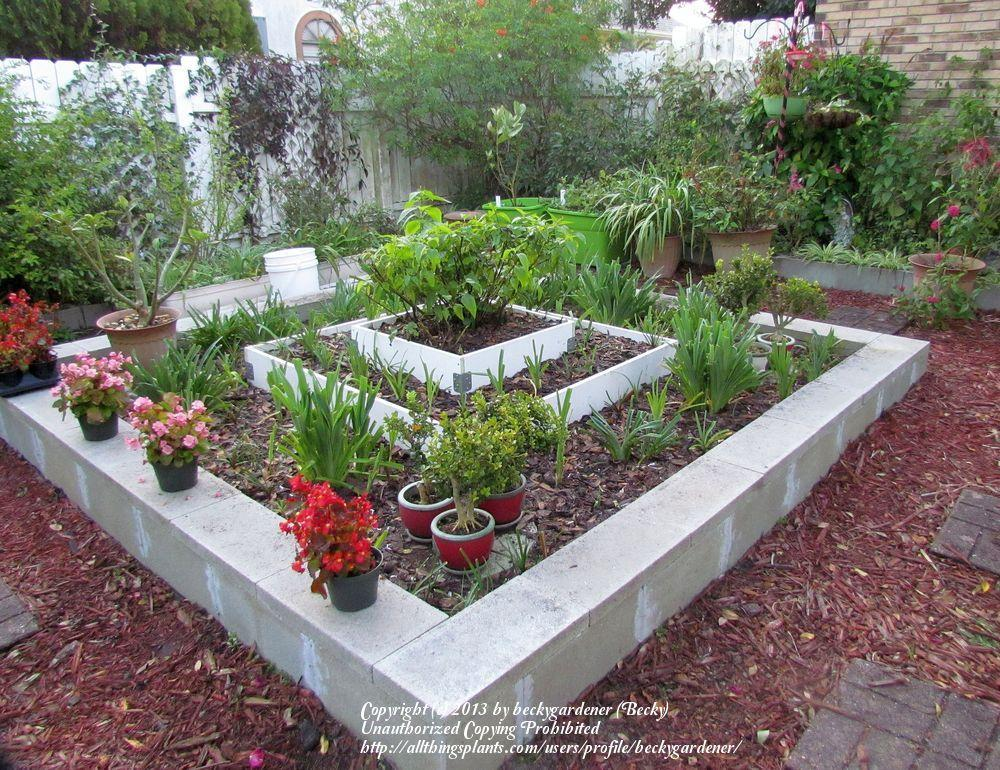 Cinder Block Raised Beds Cinder Block Raised Beds