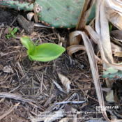 Location: Plano, TXDate: 2013-02-26Emerging in Winter