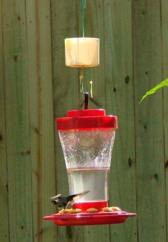 How To Make An Ant Moat For Your Hummingbird Feeder