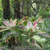Location: Sugar Mill Botanical Gardens, Port Orange, FloridaDate: 2013-03-01
