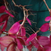 Date: 2012-10-02Aerial roots.