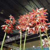 Location: Philadelphia flower showDate: 2013-03-12