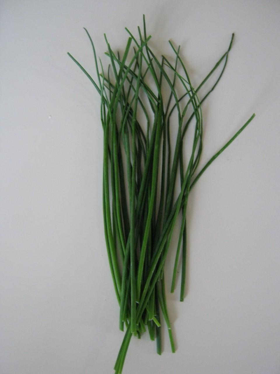 Photo of Chives (Allium schoenoprasum) uploaded by vic