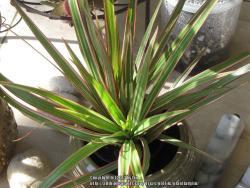 Thumb of 2013-03-17/plantladylin/6f320a