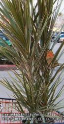 Thumb of 2013-03-17/sfrangu/a11631