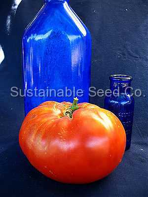 Photo of Tomato (Solanum lycopersicum 'Gigantesque') uploaded by vic