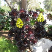Location: San Diego Botanical Garden, Encinitas, CaliforniaDate: 2013-04-01