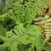 Date: 2013-04-01Autumn fern on right......
