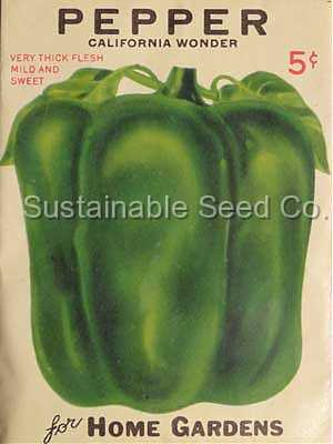 Photo of Bell Pepper (Capsicum annuum 'California Wonder') uploaded by vic