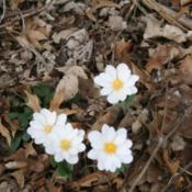 Location: My garden in southeast NebraskaDate: 2013-04-07