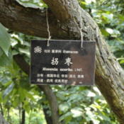 Location: Kunming Botanical Garden, Kunming, Yunnan, China.Date: August