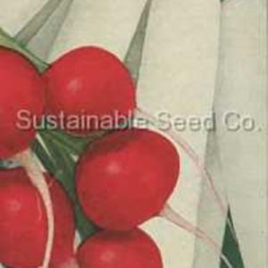 Courtesy Sustainable Seed Company