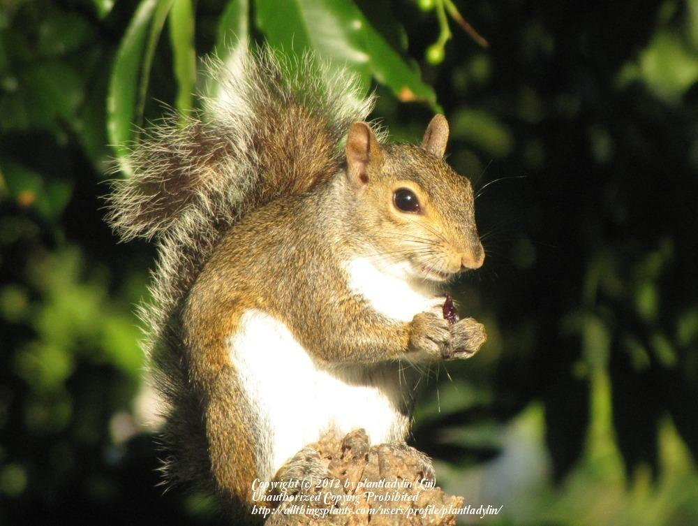 Keep Squirrels Out Of Feeders
