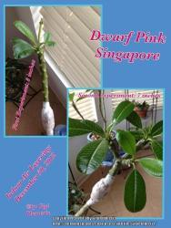 Thumb of 2013-04-12/GigiPlumeria/113b0c