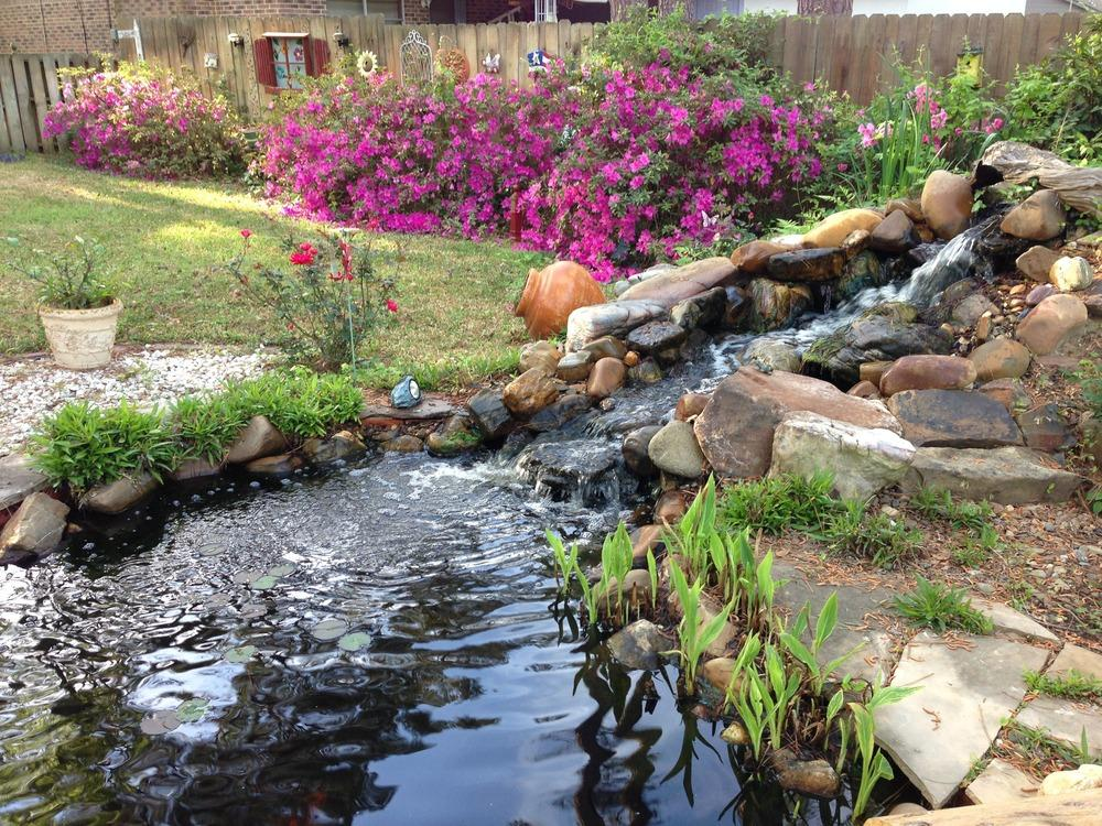 Ponds and water gardening forum cannas in the pond for Garden pond quotes