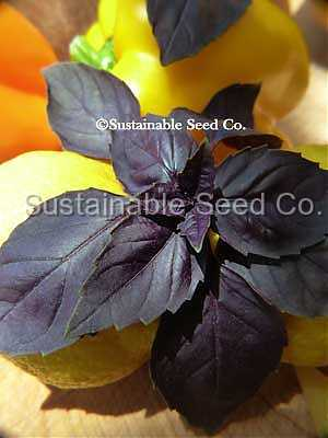 Photo of Purple Basil (Ocimum basilicum 'Purple Delight') uploaded by vic