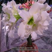 Location: 2013 Philadelphia Flower ShowDate: 2013-03-07