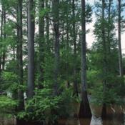 Location: central Mississippi.Natural Resources Conservation Service photo (USDA)