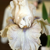 Location: Taken at a local iris showDate: 2013-05-04