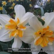 Location: Critter's garden in Frederick, MDDate: 2012-03-23