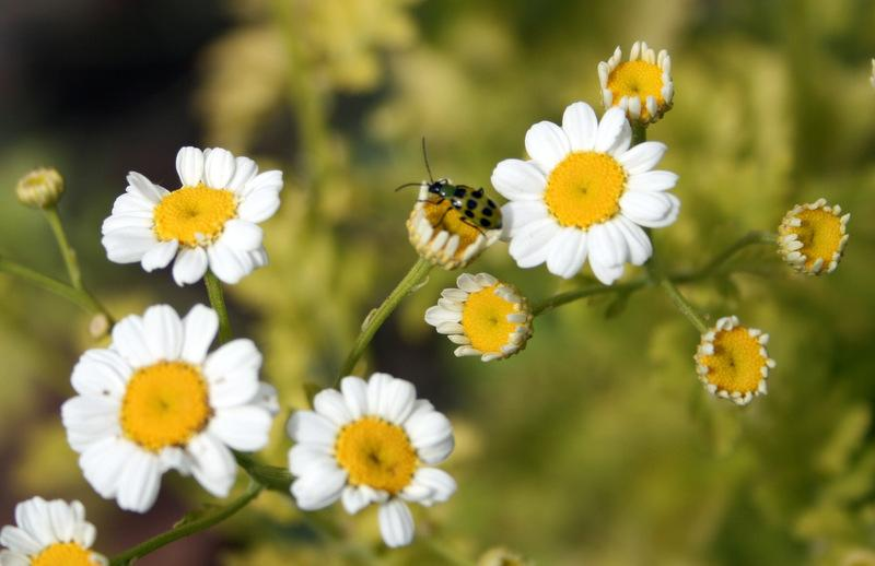 Pests and Diseases forum: Insect Identification - Garden org