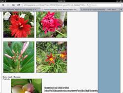 Thumb of 2013-06-12/GigiPlumeria/d04f4f