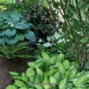 Long Living Perennials for Shade